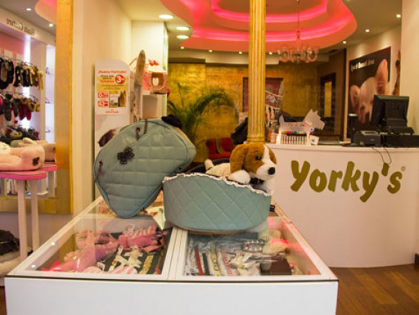 Yorky's lujo para tu mascota