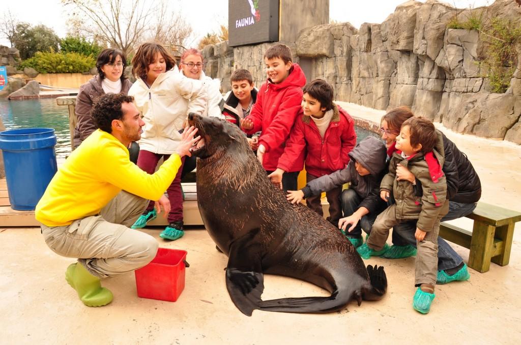Faunia te acerca a los osos marinos