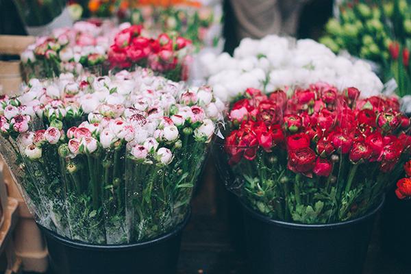 flores. hsm