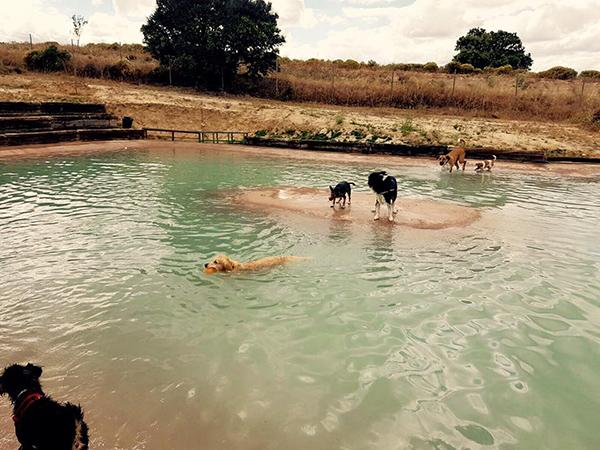 Llega a Madrid la primera piscina para perros
