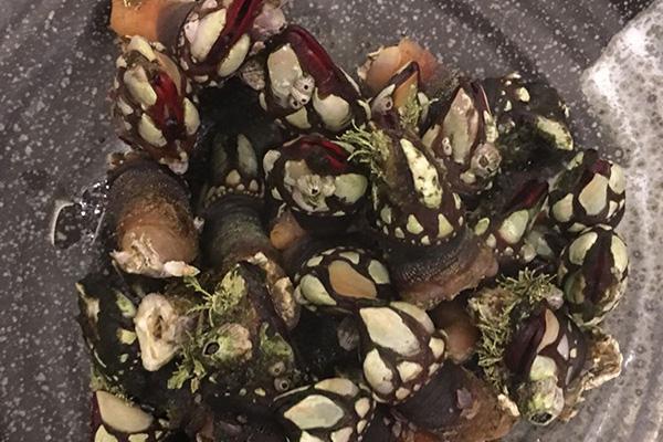 temporada-de-marisco-revista-hsm-la-tasquita