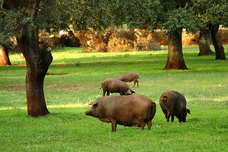 Descubre los jamones ibéricos y embutidos de Encina Don Alberto